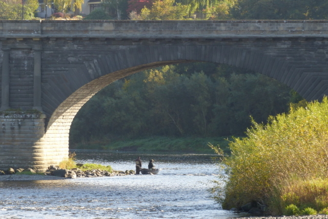 Salmon fishing under Kelso town bridge