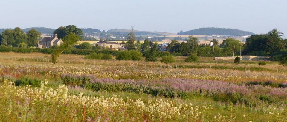 Wild flowers in Hendersyde Haugh downstream from Ednam