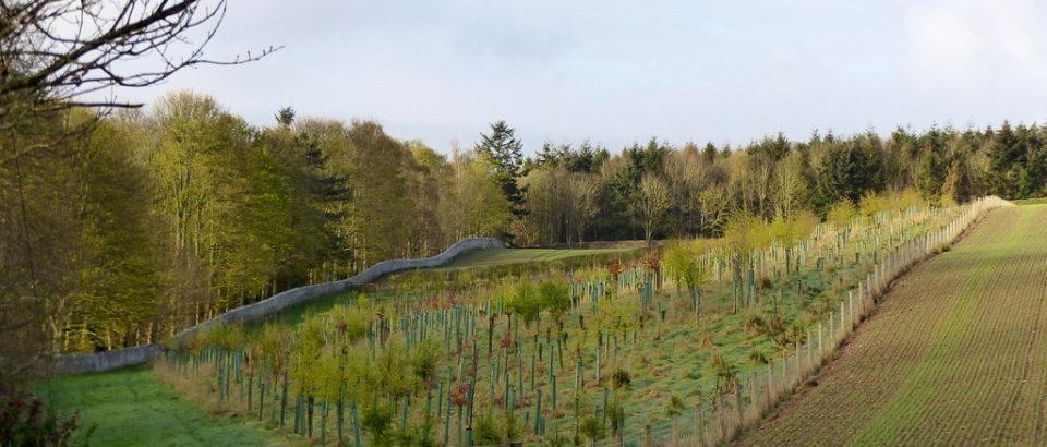 The Jubilee Wood - growing trees at Hendersyde