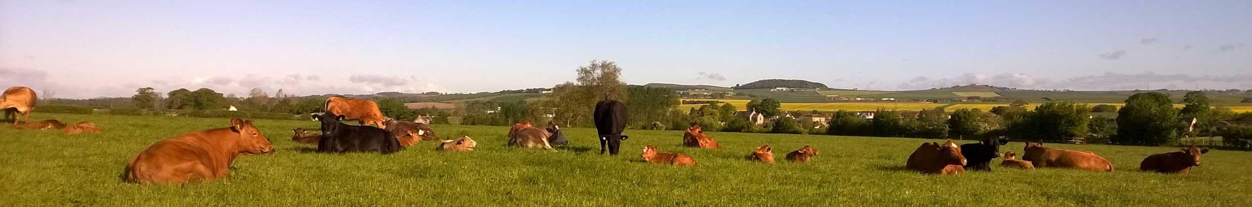 Walking across Hendersyde Farm